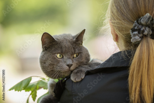 british cat on shoulder