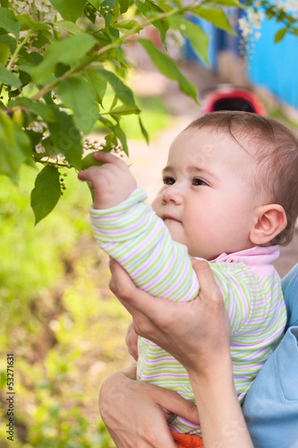 Young child touching cherry leaves by his hand