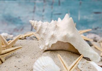 Urlaubserinnerung: Posthornschnecke mit Sand und Seesternen