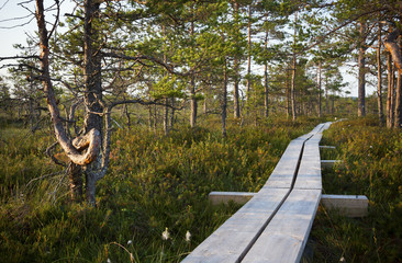 Timber boardwalk in forest