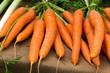 Karotte, frisch auf dem Markt