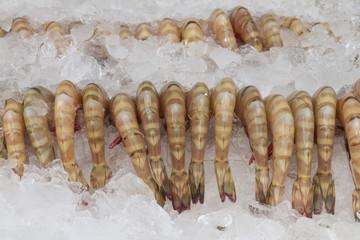 The prawn.