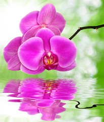 Beautiful purple orchid on green background