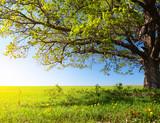 Fototapeta Krajobraz - Tree © Dudarev Mikhail