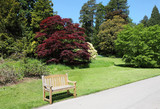 Summer in an English Park with Bench seat