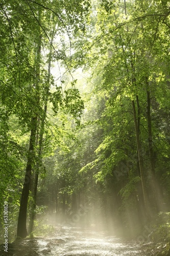 Spring forest after heavy rainfall in the sunshine