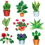 home plants photo-realistic vector set