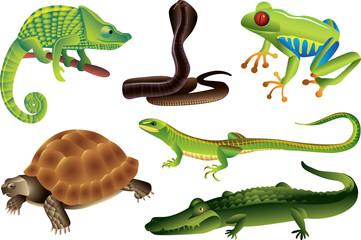 reptiles and amphibians photo-realistic vector set