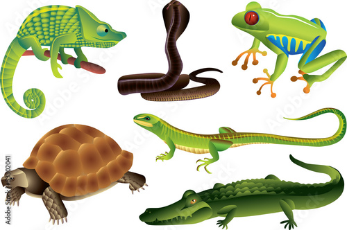 reptiles and amphibians photo-realistic vector set