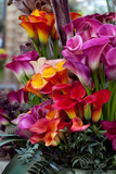 Bouquet of multicolored calla lilies.