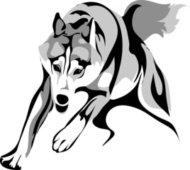 Vector stylized image of a wolf attacking