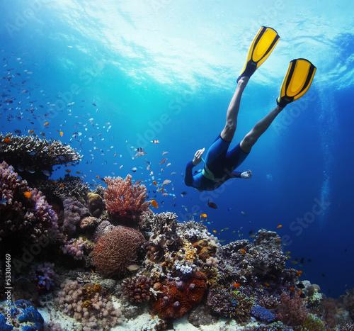 Freediver - 53306469