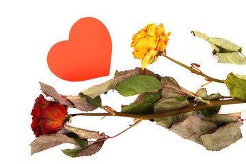 Dried flowers and red heart isolated on a white background.