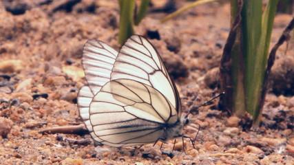 белые бабочки на песке