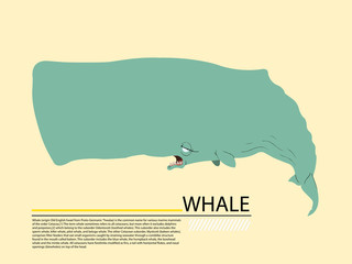 whale graphic illustration of isolated on white background
