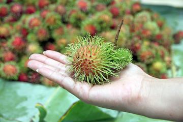 Rambutan in Hand.
