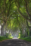 Magical woods of Dark Hedges