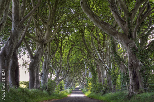 Dark Hedges road