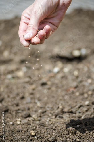 Sowing vegetables