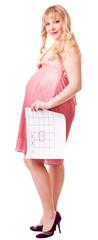 woman holds a birth calendar
