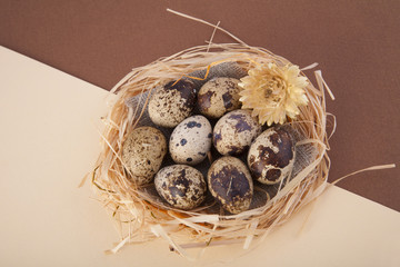 Easter quail eggs on diagonal background