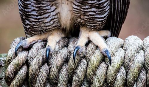Foto op Plexiglas Uil Owl Talons