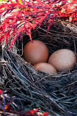 nest im roten ahorn