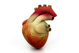 Digital illustration of human heart.