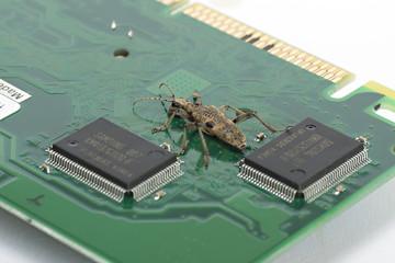 Computer Bug