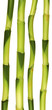 tiges de lucky bamboo, plante porte-bonheur
