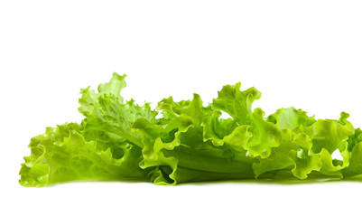 Fresh and green lettuce