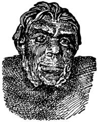 Head of Peking Man (Homo erectus pekinensis)