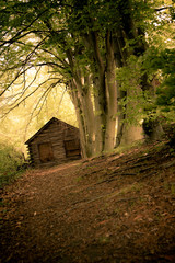 Conceptual image of dirt path leading to secluded cabin