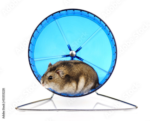 Dwarf Hamster in Blue Exercise Wheel