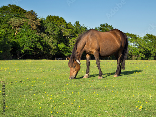 BrwonHorse Grazing in a Grassy Field