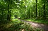 Fototapety Waldweg im Sommer