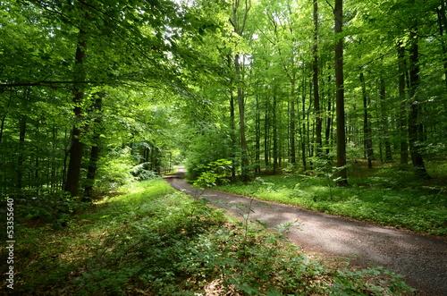 canvas print picture Waldweg im Sommer