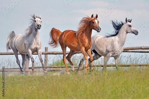Sticker horses