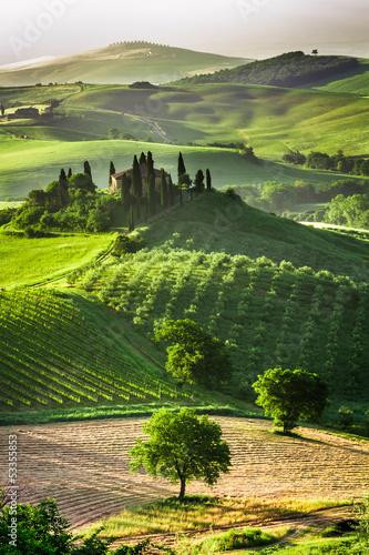 Leinwanddruck Bild Farm of olive groves and vineyards