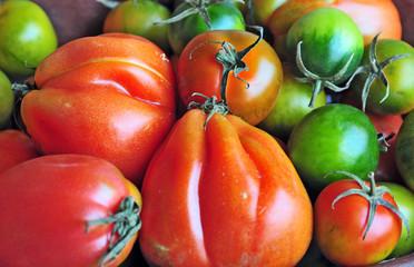 Pomodori cuore di bue e sardi
