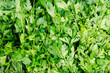 Stand with frest green parsley at market