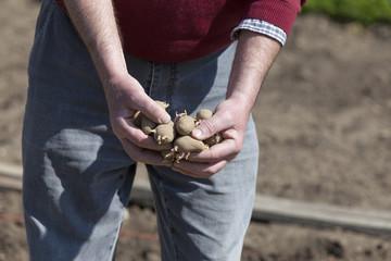Mann (Rentner) bei der Gartenarbeit im Gemüsegarten