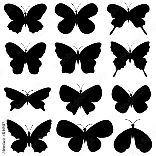 Butterflies collection.