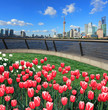Red tulips prospects of Shanghai bund Lujiazui city landmark sky
