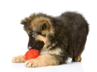 puppy play with a wool ball.  isolated on white background