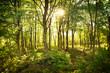 ぶなの木の森
