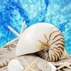 Sommer am Strand: Nautilus vor blauem Meer :)