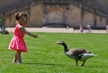 petite fille donne a manger au canard