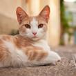 Jeune chat tatoué à l'oreille