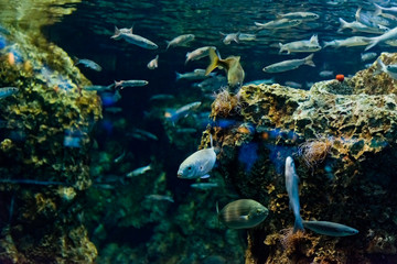 tropical  fishes in natural environment
